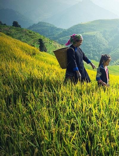 farmer in tea farm