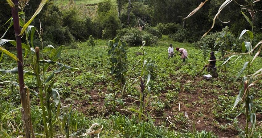 sidefarm land